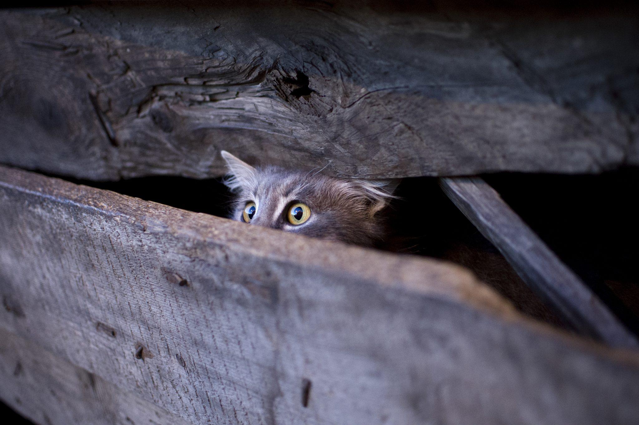 cat leashes petsmart